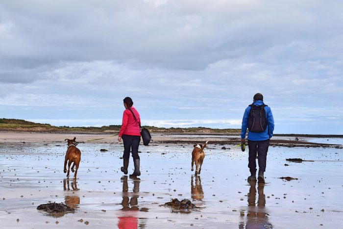 Walk dogs on the beach with your significant other Breast Cancer Treatment